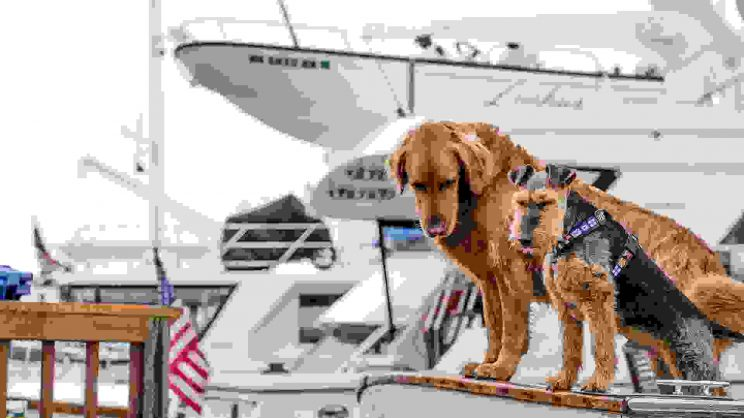 Dogs on yacht