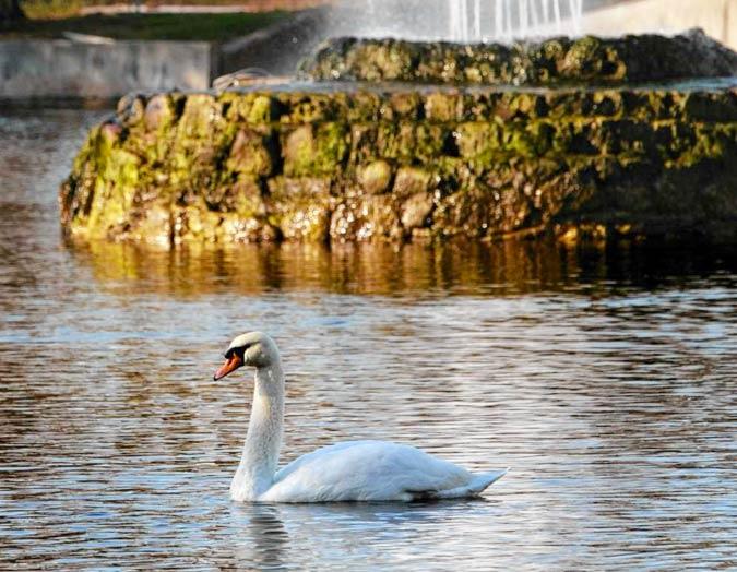 Manlius Swan Pond