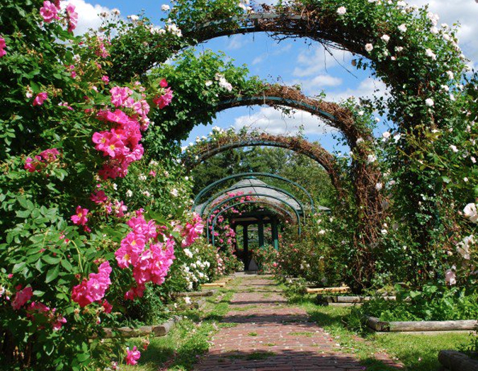 A beautiful rose garden
