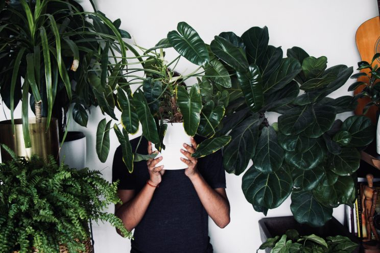 a man holding a large plant in front of his face